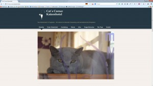 AgenturWP WordPress Web-Projekt Cats Corner Katzenhotel